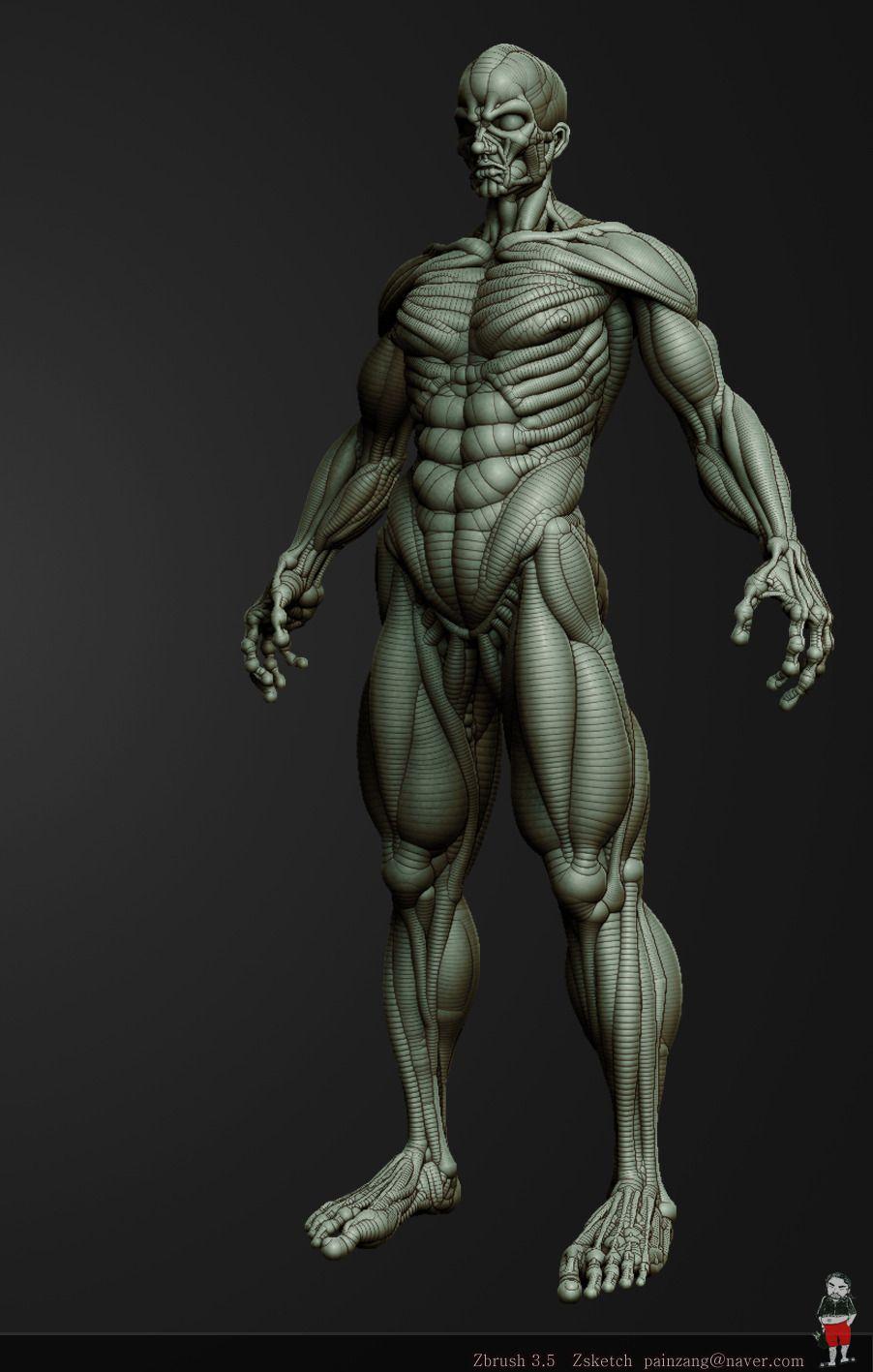월향백화 :: [Zbrush] Anatomy Zsketch | zbrush figuretiv | Pinterest