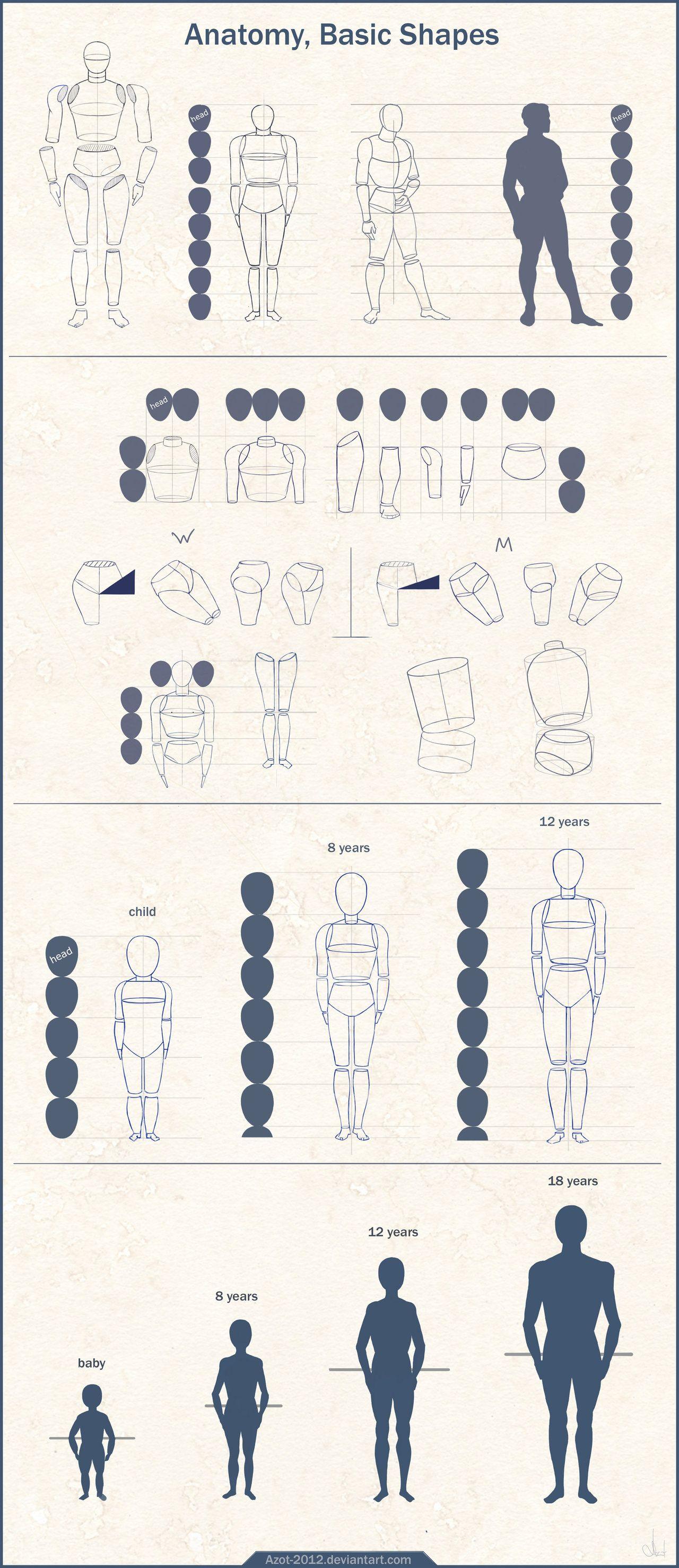 Anatomy Basic Shapes by Azot2014.deviantart.com on @deviantART   ART ...