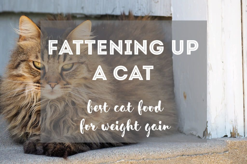 If you're trying to help your cat gain weight, their diet