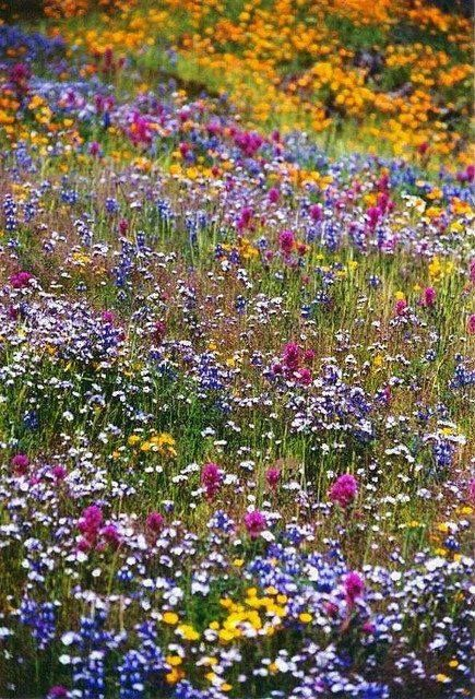Photo of field of flowers