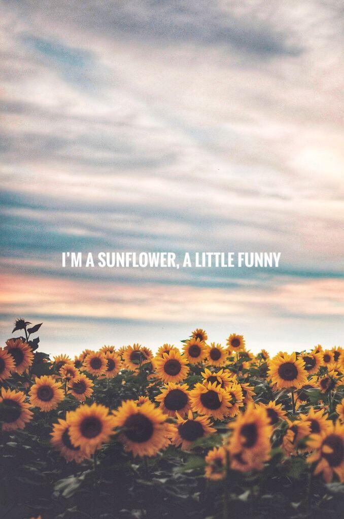 Sierra Burgess. Sunflower🌻 - #Burgess #planodefundo #Sierra #Sunflower