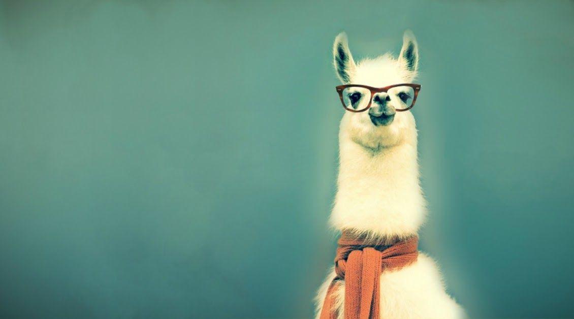 91de326039 Smart Llama - sweater - glasses - hipster - wallpaper - green background -