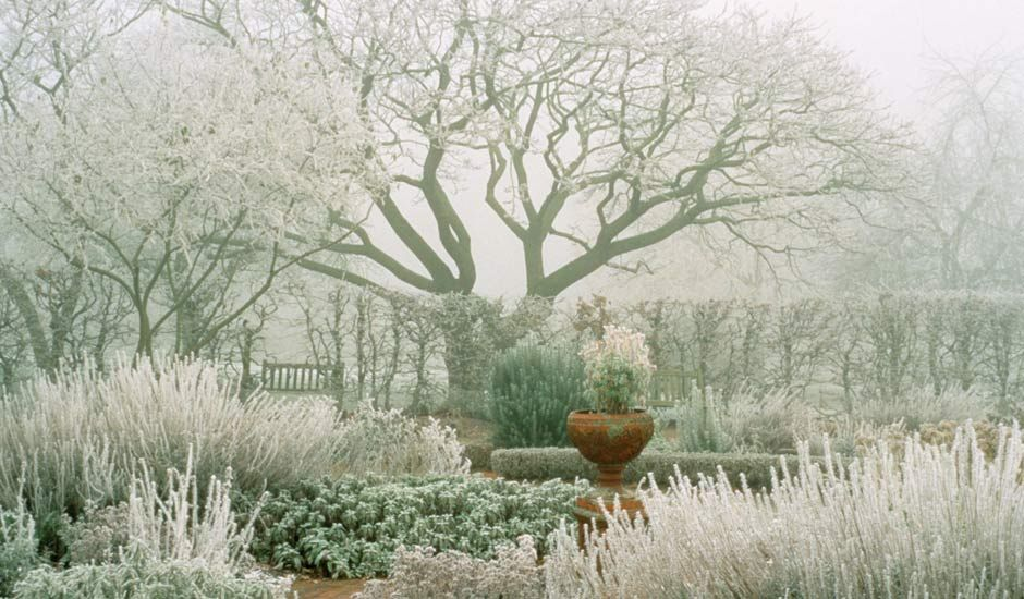Anatomy of a garden: Design laid bare #wintergardening