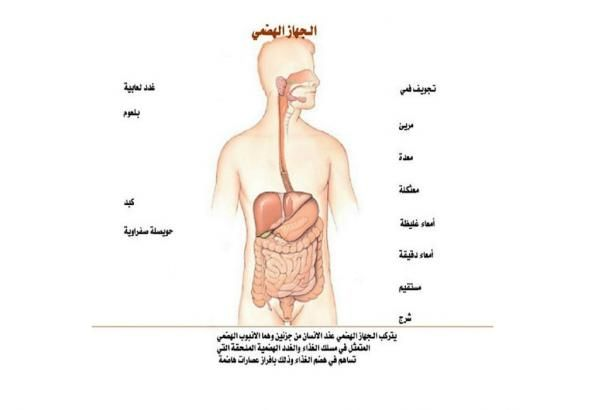الجهاز الهضمي عند الإنسان مكوناته وأقسامه وطريقة عمله Biologie Anatomie