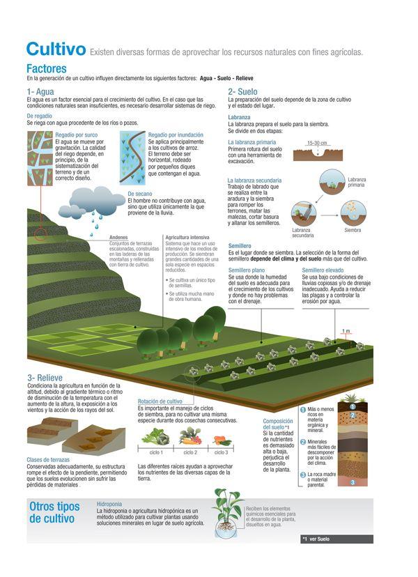 Cultivo Ciencias De La Naturaleza Agronomia Ciencia Y Conocimiento