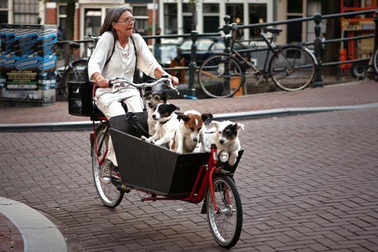 Pin En Cargo Bikes Their Loads