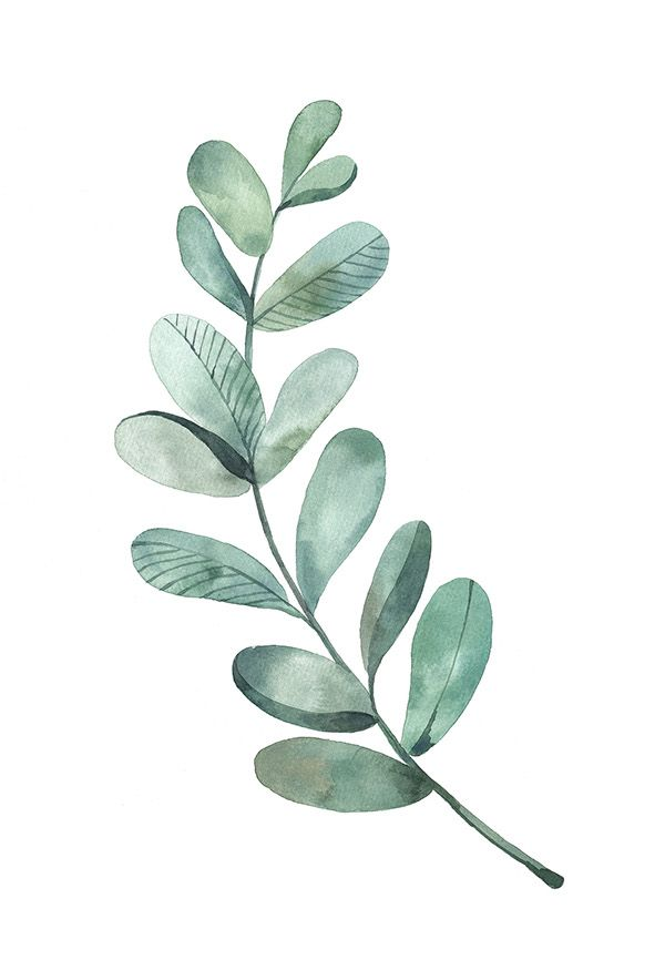 Watercolor leaf like pinterest watercolor leaves for Watercolor greenery