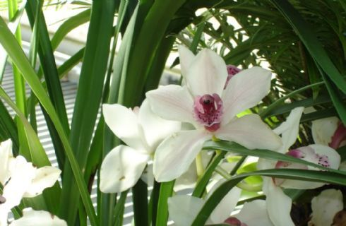 Come Curare Le Orchidee In Inverno Temperatura Mite Poca Acqua E