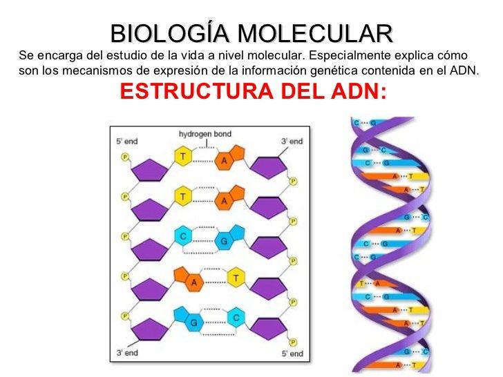 Biología Molecular Ing Genética Biotecnología Reprod