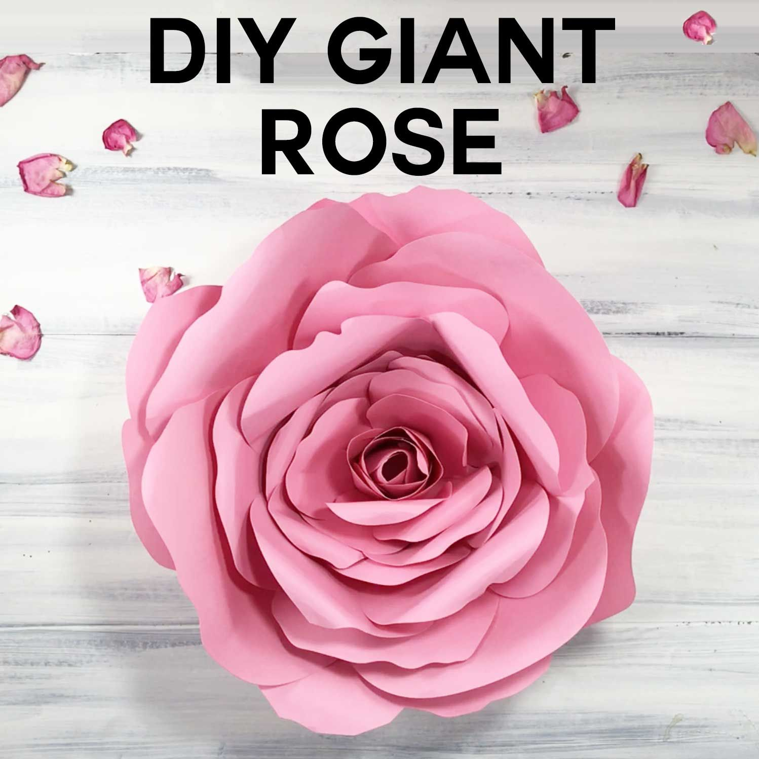 Giant Flower Spellbound Rose Every Petal Is Unique Pinterest
