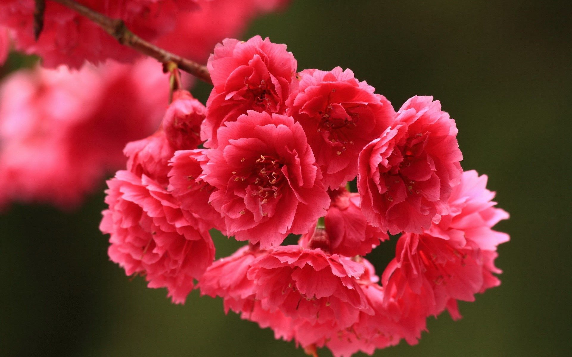Flower To Download Scream Pinterest Flower Backgrounds