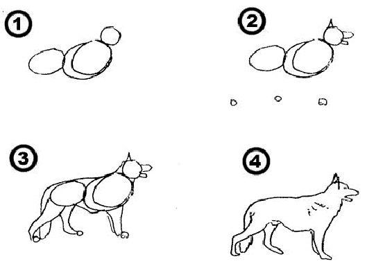 Kleurplaten Honden Duitse Herder.Hoe Schets Je Een Hond Drawings How To Draw Schets En