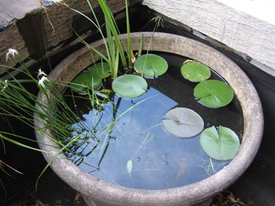 How to DIY Mini Garden Pond in a Container 5   Container ...