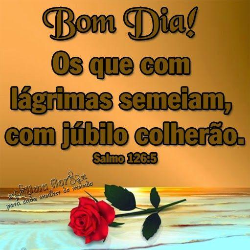 Uma Flor Para Cada Mulher Do Mundo Bom Dia Com Alegria Bíblia