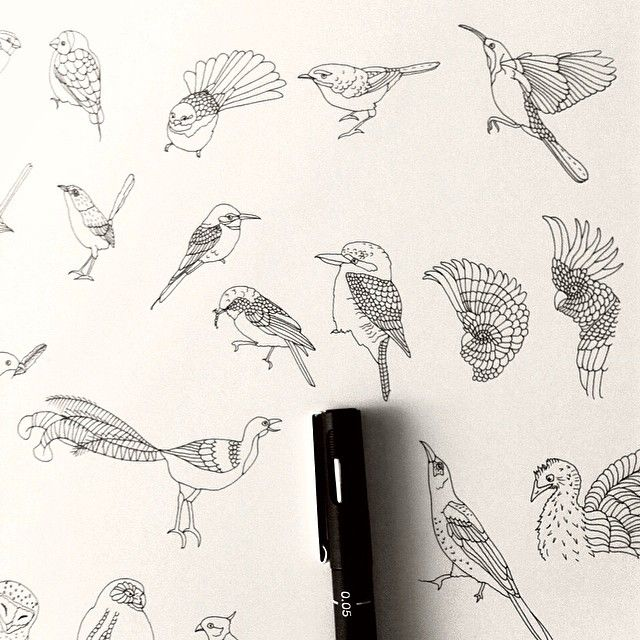 Drawing Many Birds Yes All Of These More Will Be Featured In My