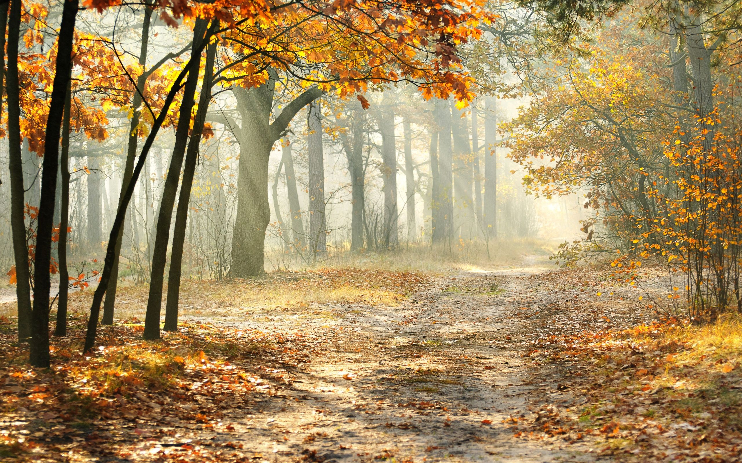 A Road Through The Yellowed Forest Beautiful Nature