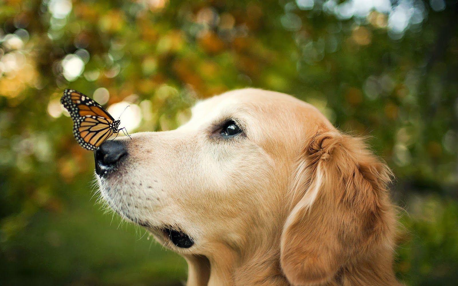 hund mit schmetterling auf schnauze  animaux mignons