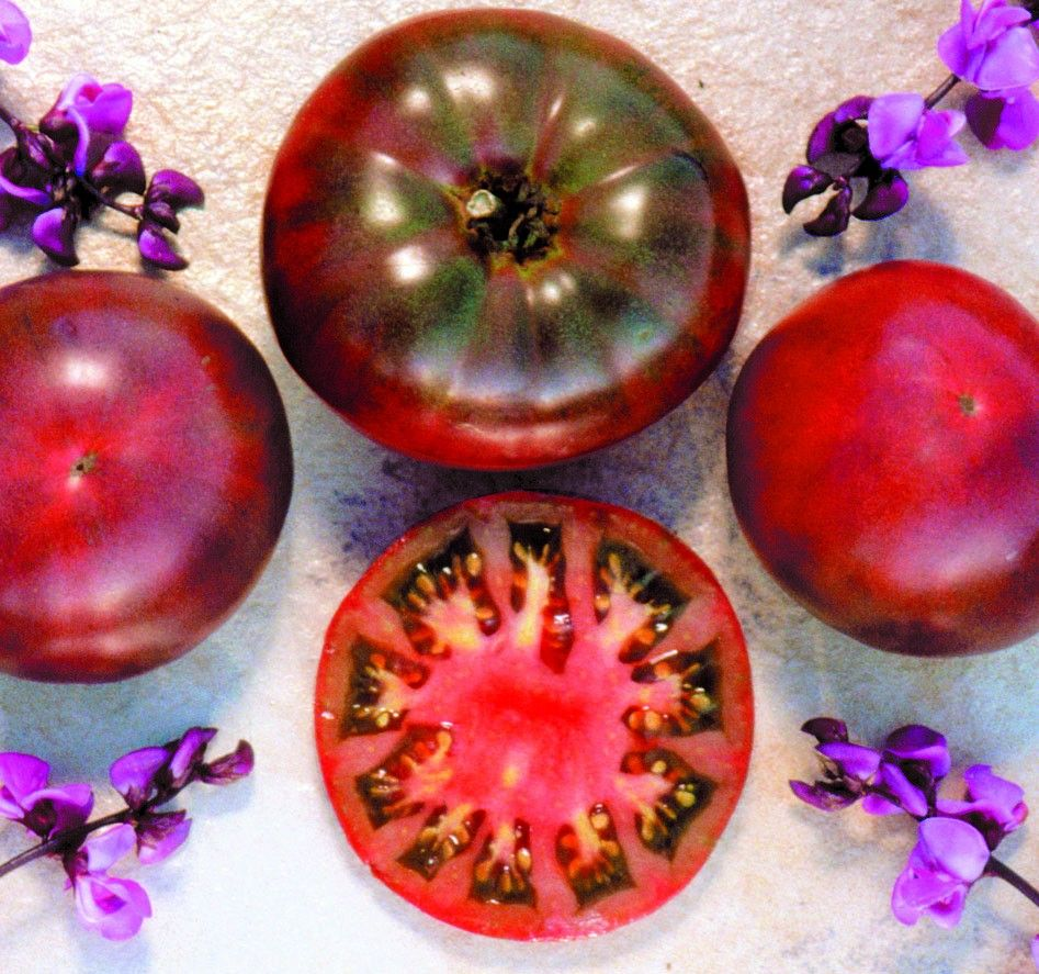 Cherokee Purple Tomatoes Mine Are Blooming Now Can T 400 x 300
