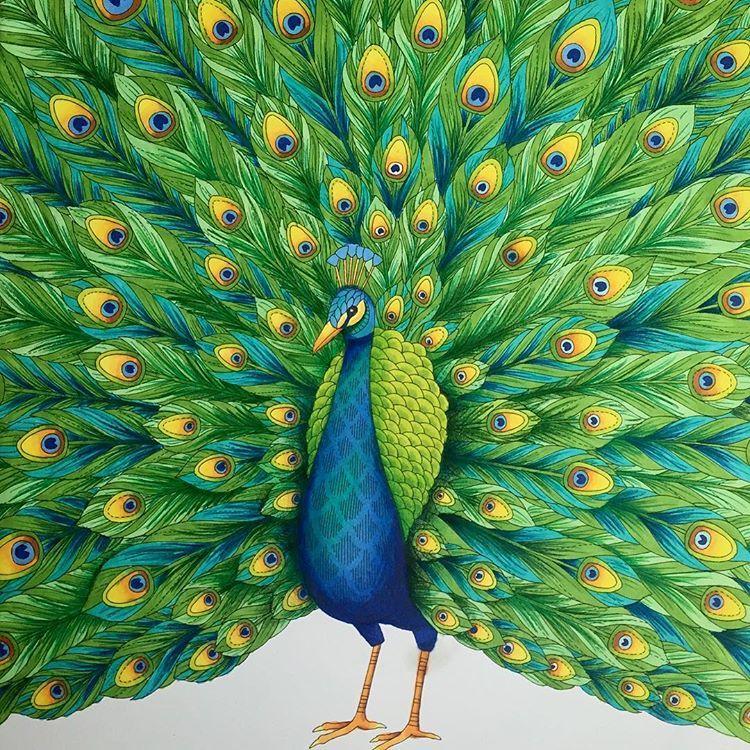Millie Marotta Tropical Wonderland Colouring Milliemarottastropicalwonderland Milliemarotta Promarkers Fineliner Prismacolorpencil