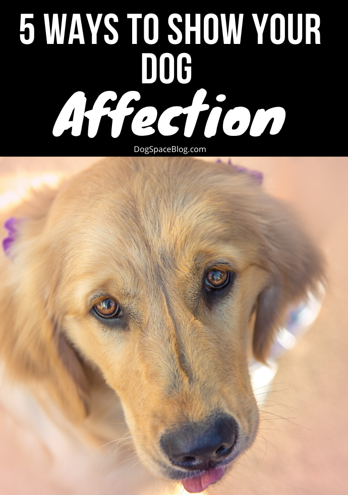 Even the fiercest of dogs will hold no reservations when it comes to showing love to its owner, but do you know how to show your dog love? 5 Ways How To Show Your Dog Love #dogs #doglovers