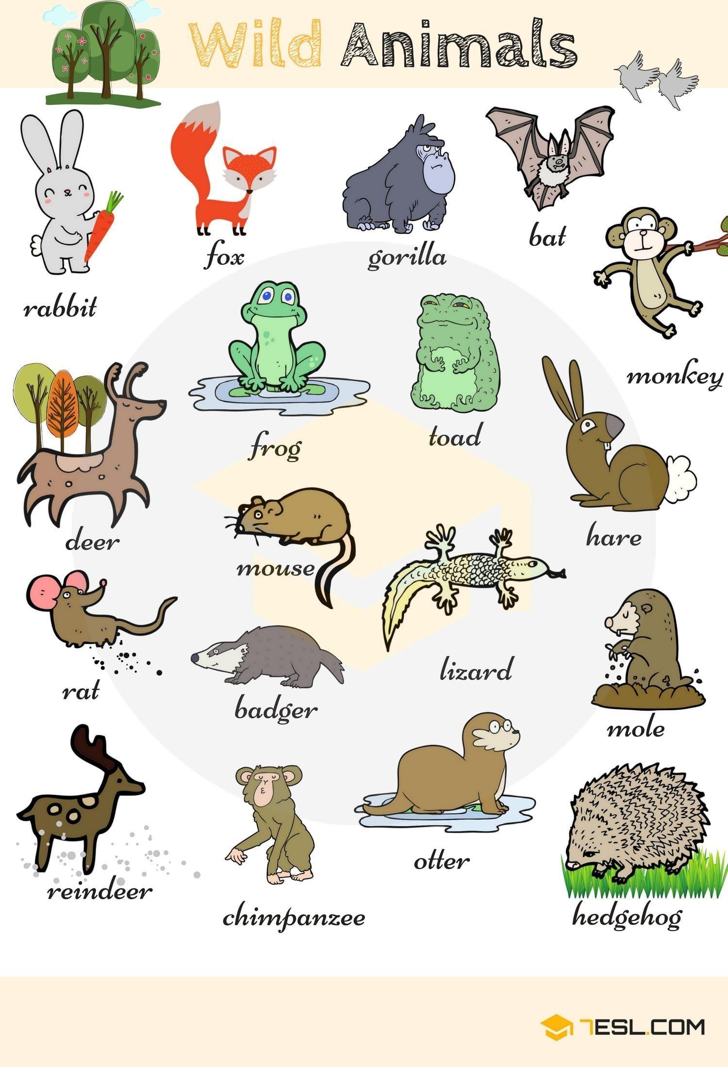 Animales Del Bosque Animales En Ingles Animales Salvajes Vocabulario En Ingles
