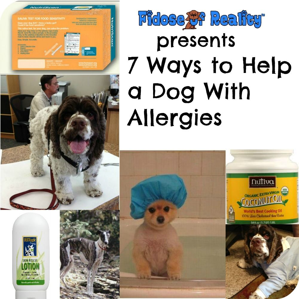 7 Ways To Help A Dog With Allergies Dogs Pets Happy Animals