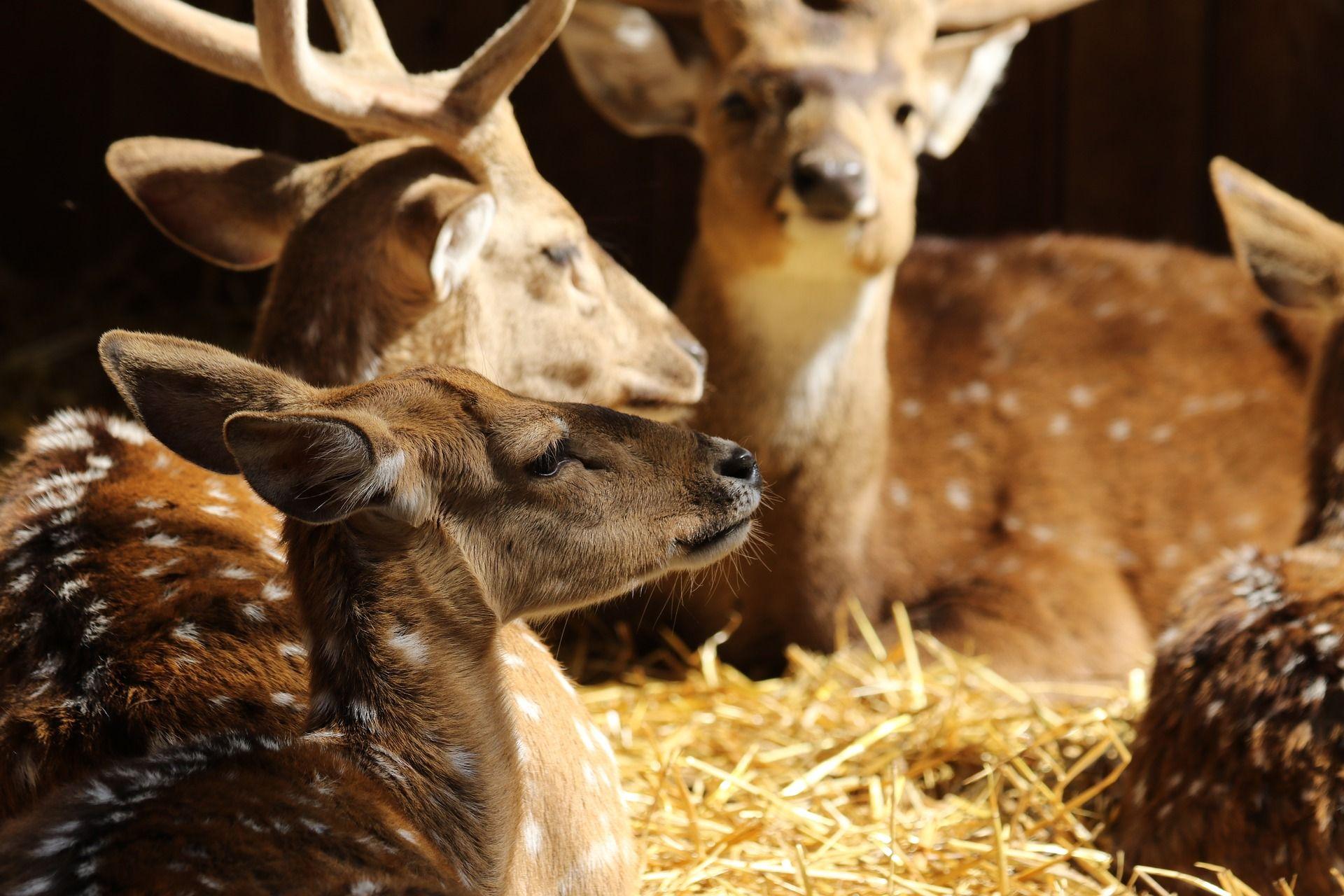 Deer Mating Season (With images) Deer photos, Deer