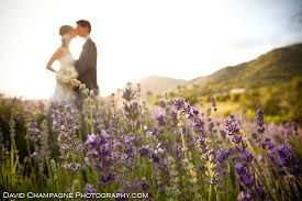 Image result for lavender farm california wedding