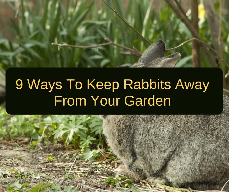 How To Keep Rabbits Out Of The Garden - 9 Easy Ways ...