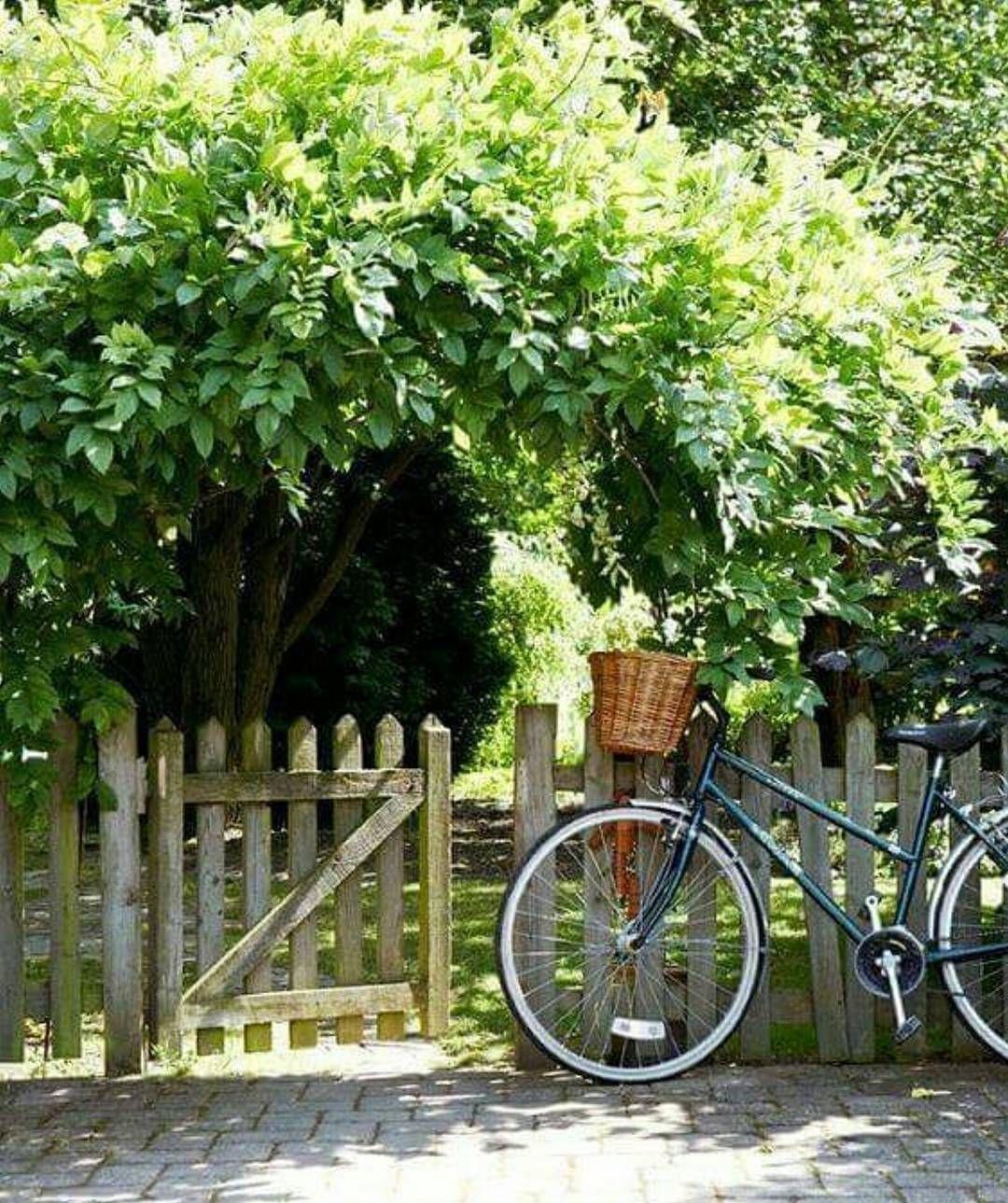 """1,255 curtidas, 12 comentários - Nella casa di Ro (@nellacasadiro) no Instagram: """"Boa tarde! 💚🍃 #boatarde#goodafternoon#bikes#nellacasadiro"""""""