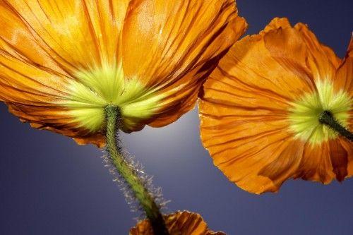 Orange Sky by Thom Masat