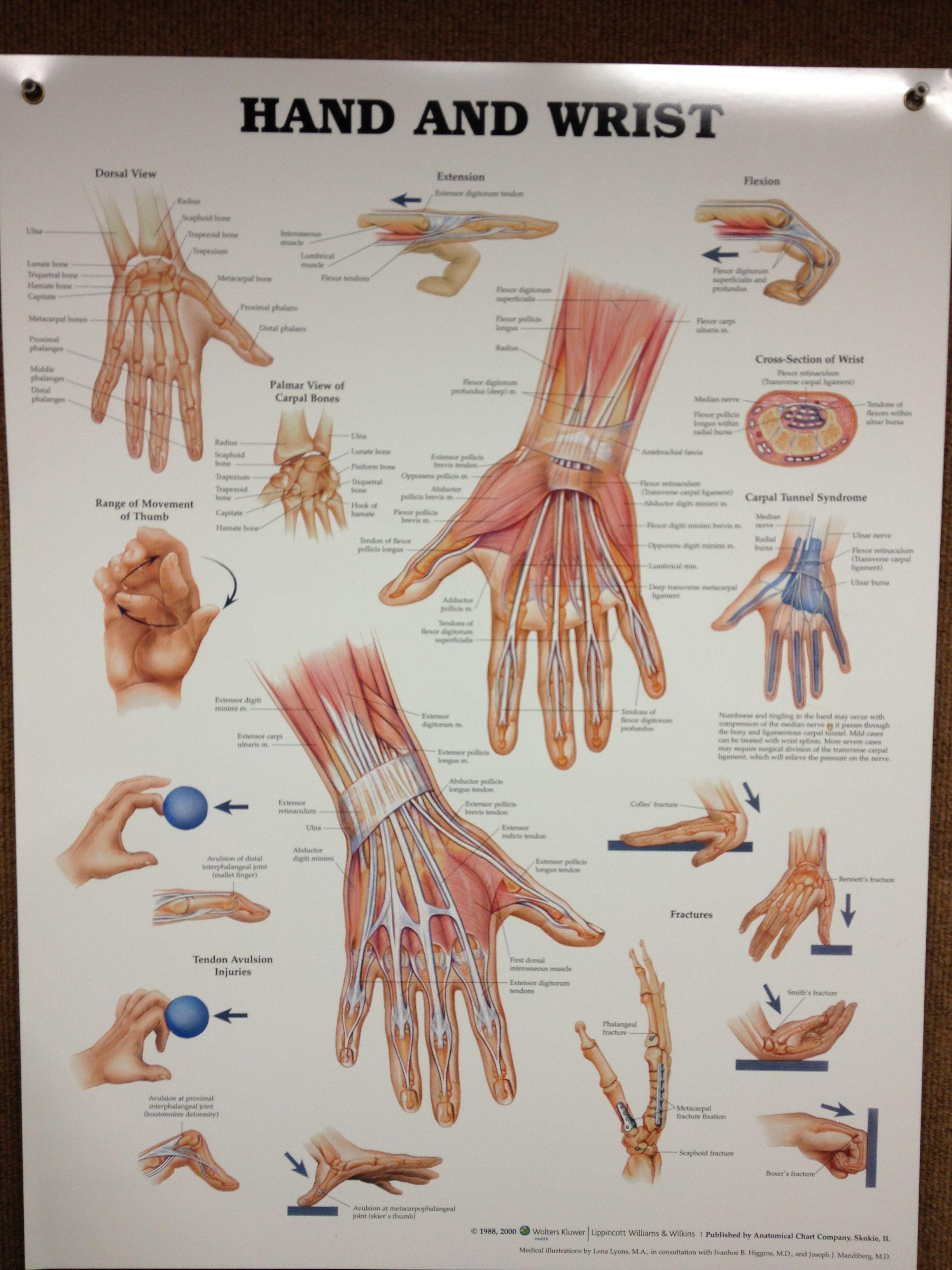 Hand & Wrist | Health :: Bone & Muscles | Pinterest | Hand wrist and ...