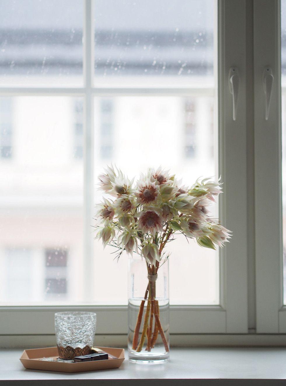 Blushing bride (serruria florida) - Pupulandia