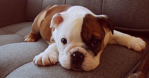 cute cute cute!