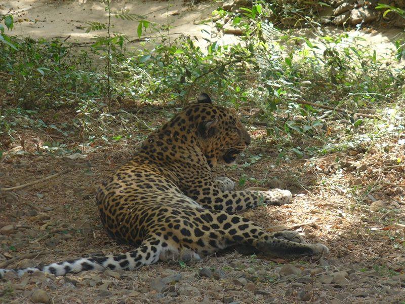 Valmiki National Park in Bihar, India Wildlife