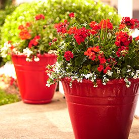Love This Item From The Home Depot Summer Style Guide Front Porch Flower Pots Flower Pots White Flower Pot