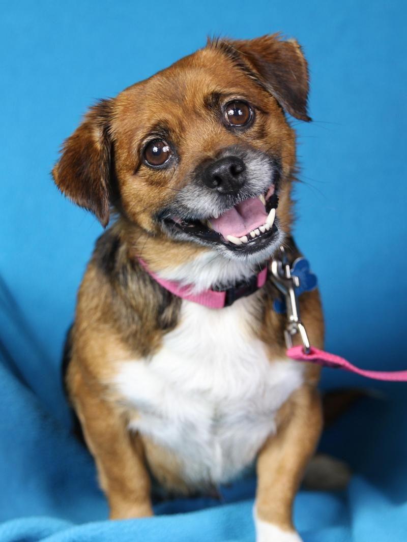 Adopt Miriam on Adoptable beagle, Dogs, mix