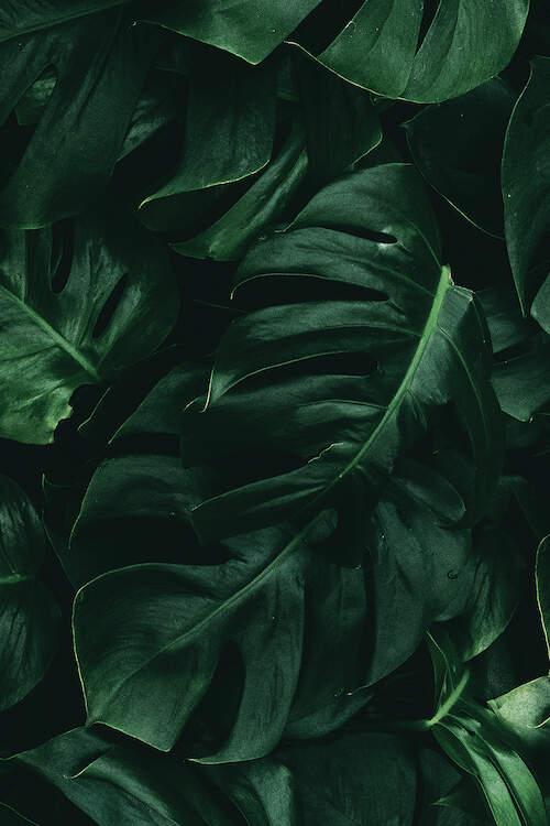 Leaf Green Ii Art Print By Danilo De Alexandria Green Leaf