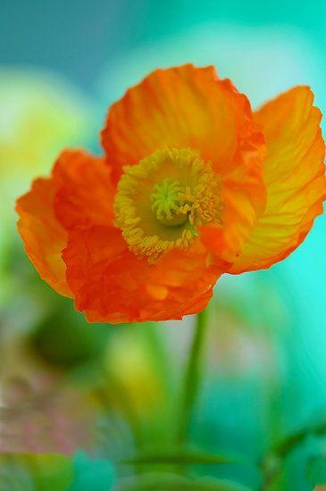 Impressionistic Poppy by Renee Hubbard