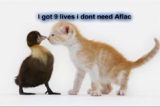 Kitten Stands Up Against Aflac Duck And It S Life Insurance Unusual Animal Friends Animals Friendship Cute Animals
