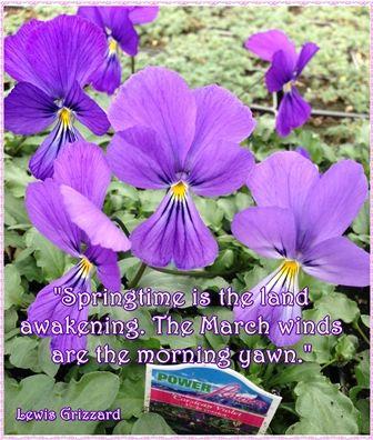Spring Garden Quote On Corsican Violets Garden Quotes Bountiful Garden Spring Garden