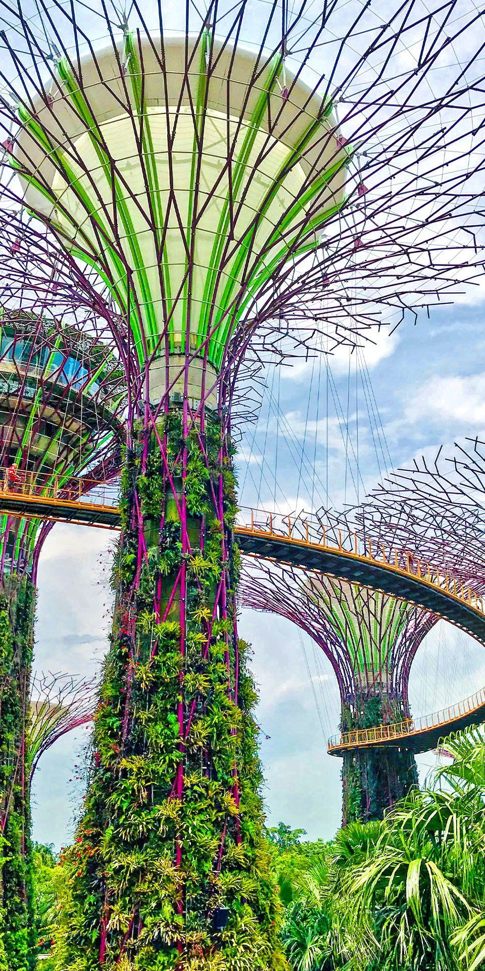 Singapore Singapore The Singapore Botanic Garden And Adjoining