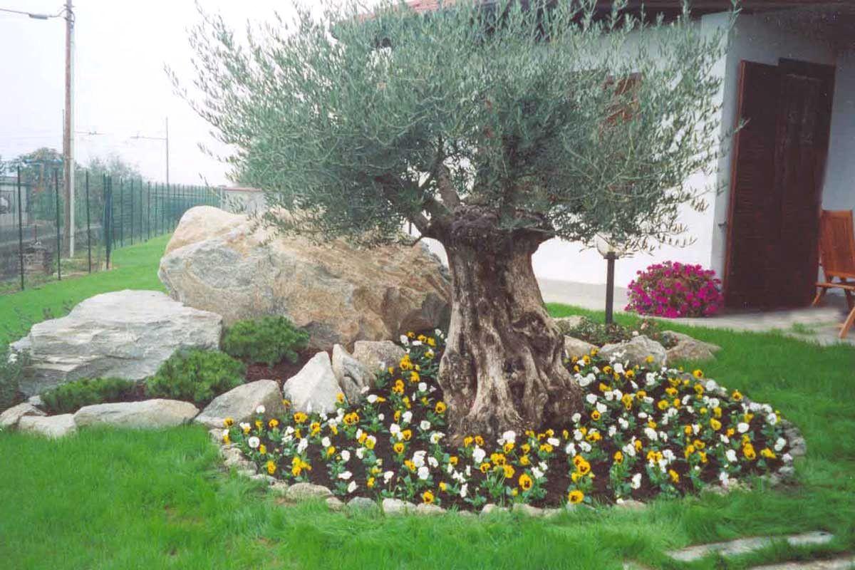 Prezzi Alberi Da Giardino abbellire un albero di ulivo ecco 16 splendidi esempi per