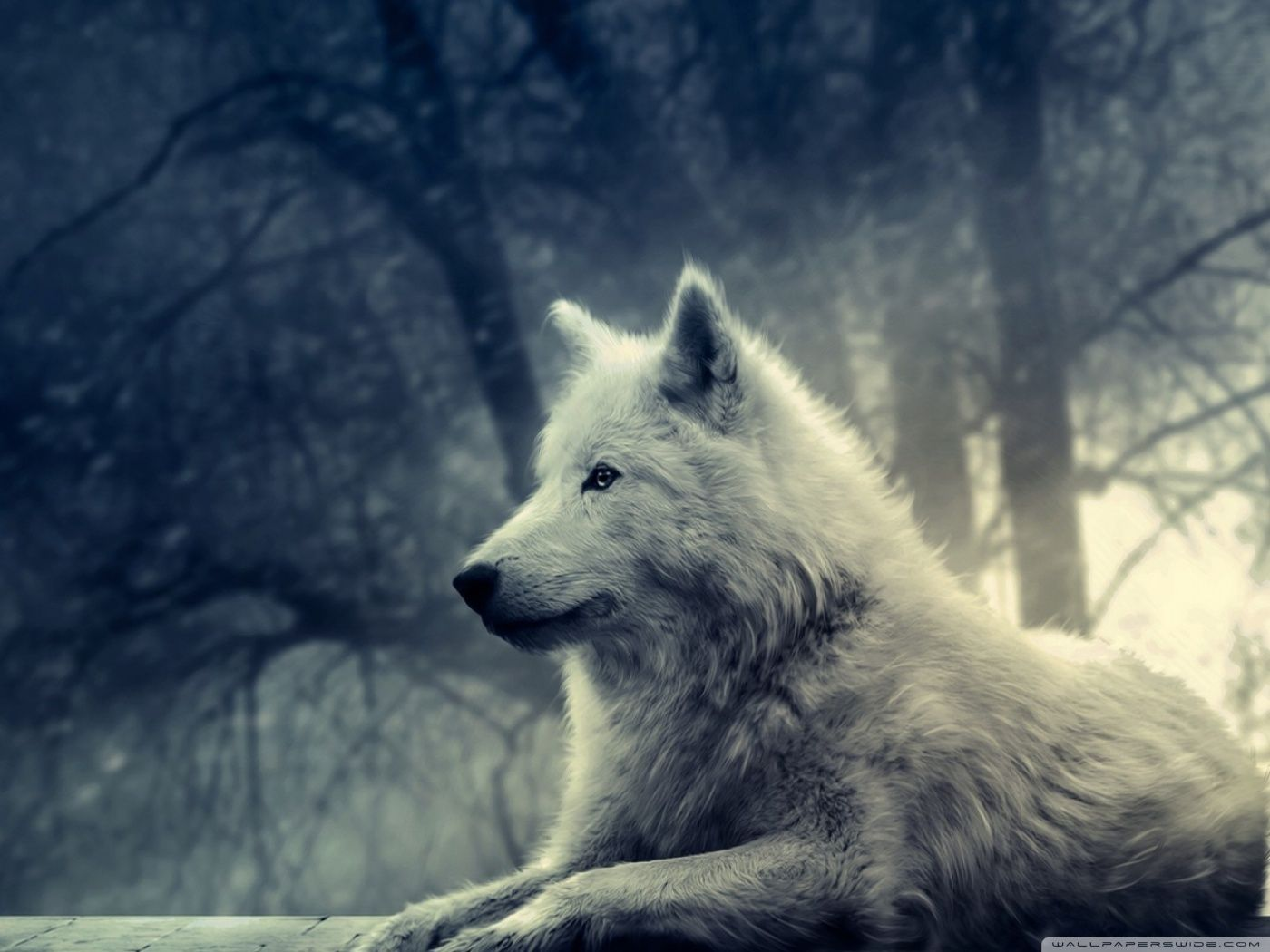 White Wolf Painting 4k Hd Desktop Wallpaper For 4k Ultra Hd Tv Wolf Photos Wolf Background Beautiful Wolves