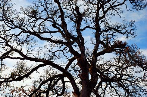 Here's the next installment of my connected flash fiction experiment. And here's the picture's source. Photographer is Gary Halvorson, Old_Oak_Tree_(Polk_County,_Oregon_scenic_images)_(polDA0002)