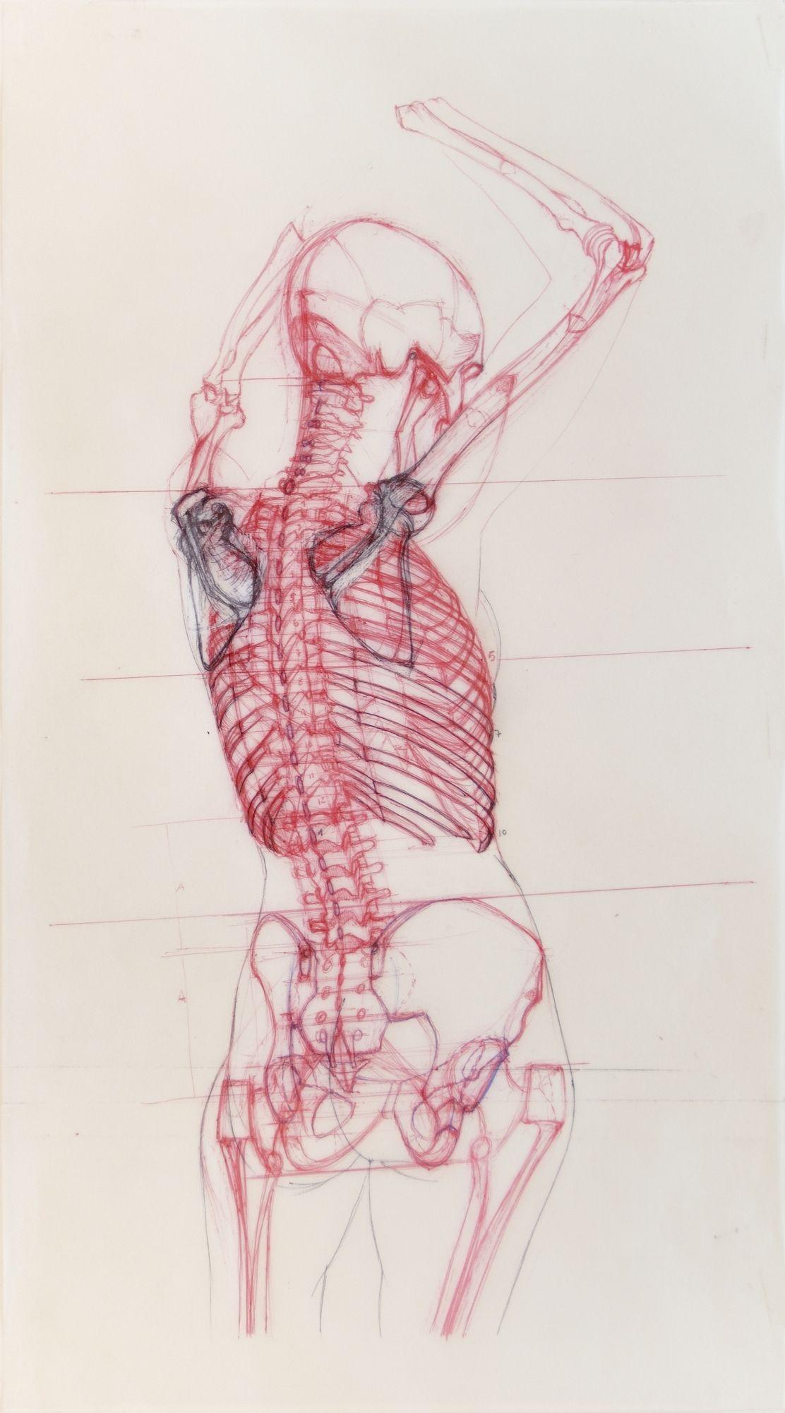 Moderno Anatomía De Un Pescador Regalo - Imágenes de Anatomía Humana ...