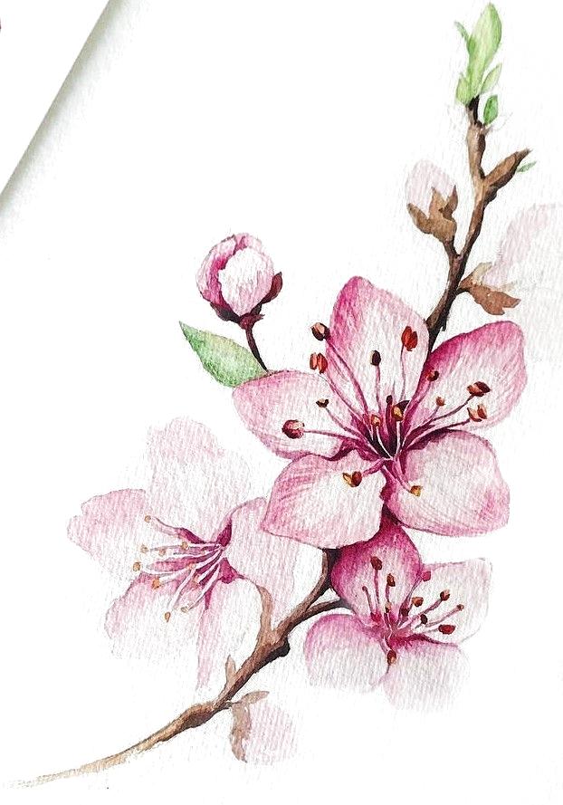 Basicflowersdrawing Bigflowersdrawing Flowersdrawinggirl Flow Blumen Malen Blumen Zeichnung Blumen Zeichnen