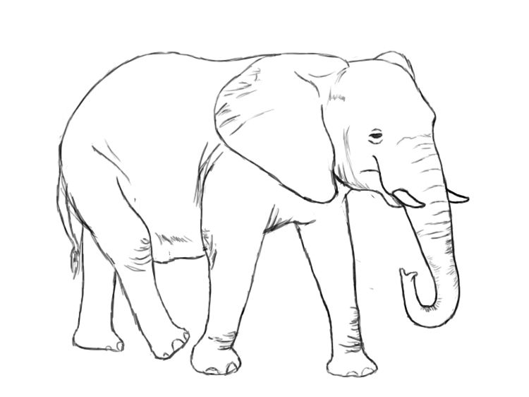 How To Draw An Elephant Elephant Drawing Elephant Face Drawing