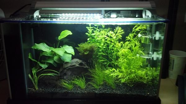 Beautiful Fluval Spec   I Am Getting A Fluval Spec V 5 Gallon Desktop Tank, And Am  Deciding What To Put In I Am For Sure Going Planted, With A Nice Piece Of  ...