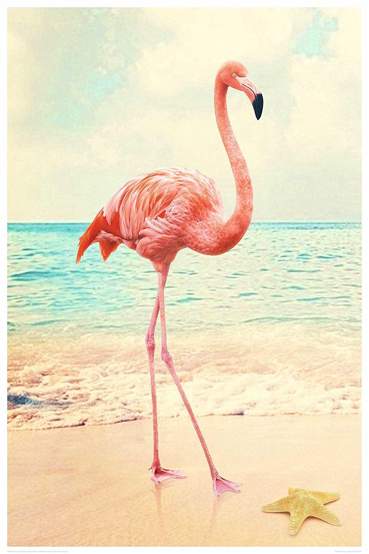 Amazon.de REINDERS Flamingo Poster 61 x 91, 5 cm